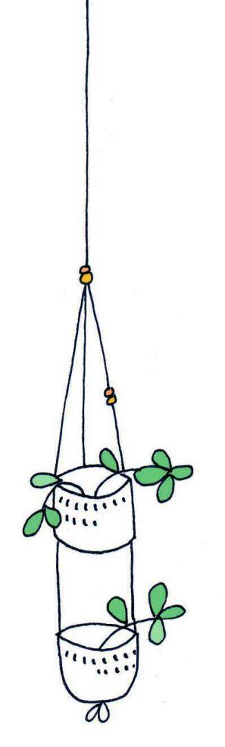 hanging plant2